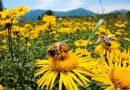 Массовое исчезновение насекомых ставит под угрозу продовольственную безопасность в мире