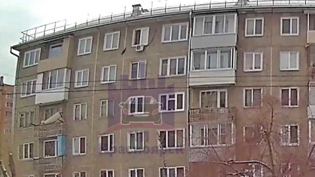 Той-терьер Красноярск