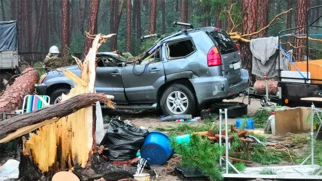 Последствия падения деревьев у озера Маслеево в Дзержинском районе Красноярского края
