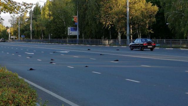 в Саратовской области массово гибнут птицы