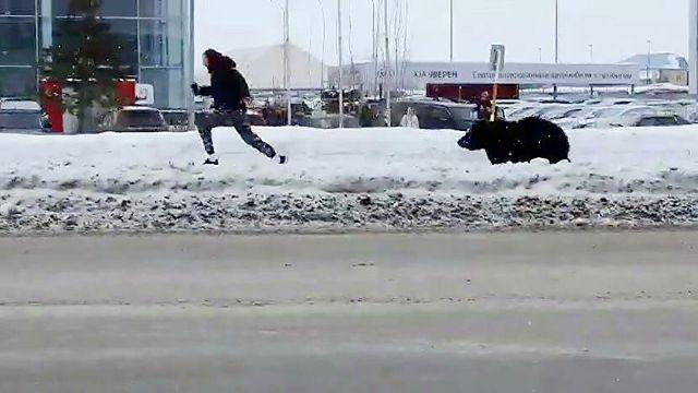 Медведь гонял прохожих на улицах Нижневартовска