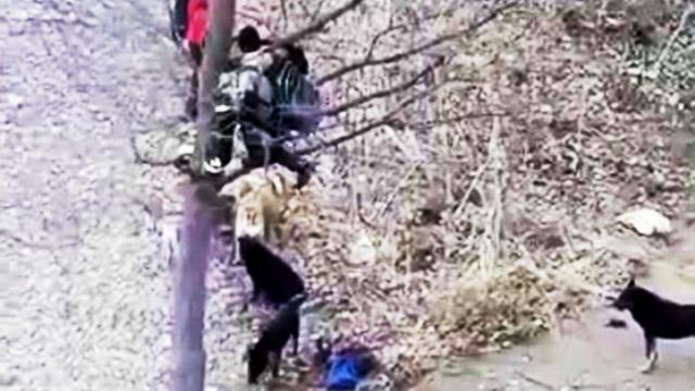 Бродячие собаки загнали школьников на дерево