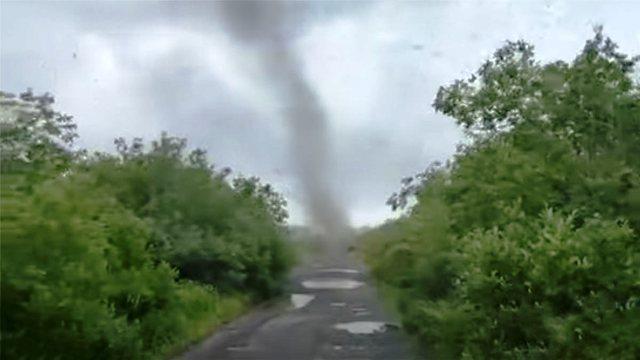 «Торнадо» из комаров обрушился на Камчатку