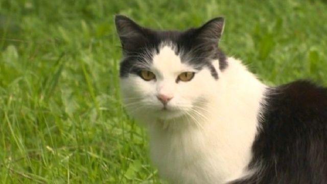 С дразнившего собак кота сняли все обвинения