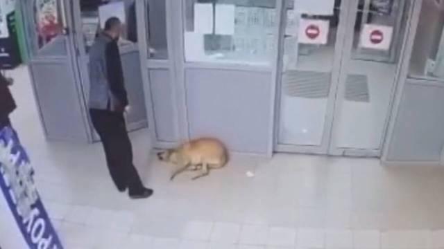 Сотрудников «Магнита» обвинили в отравлении собак